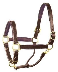 best halters for horses