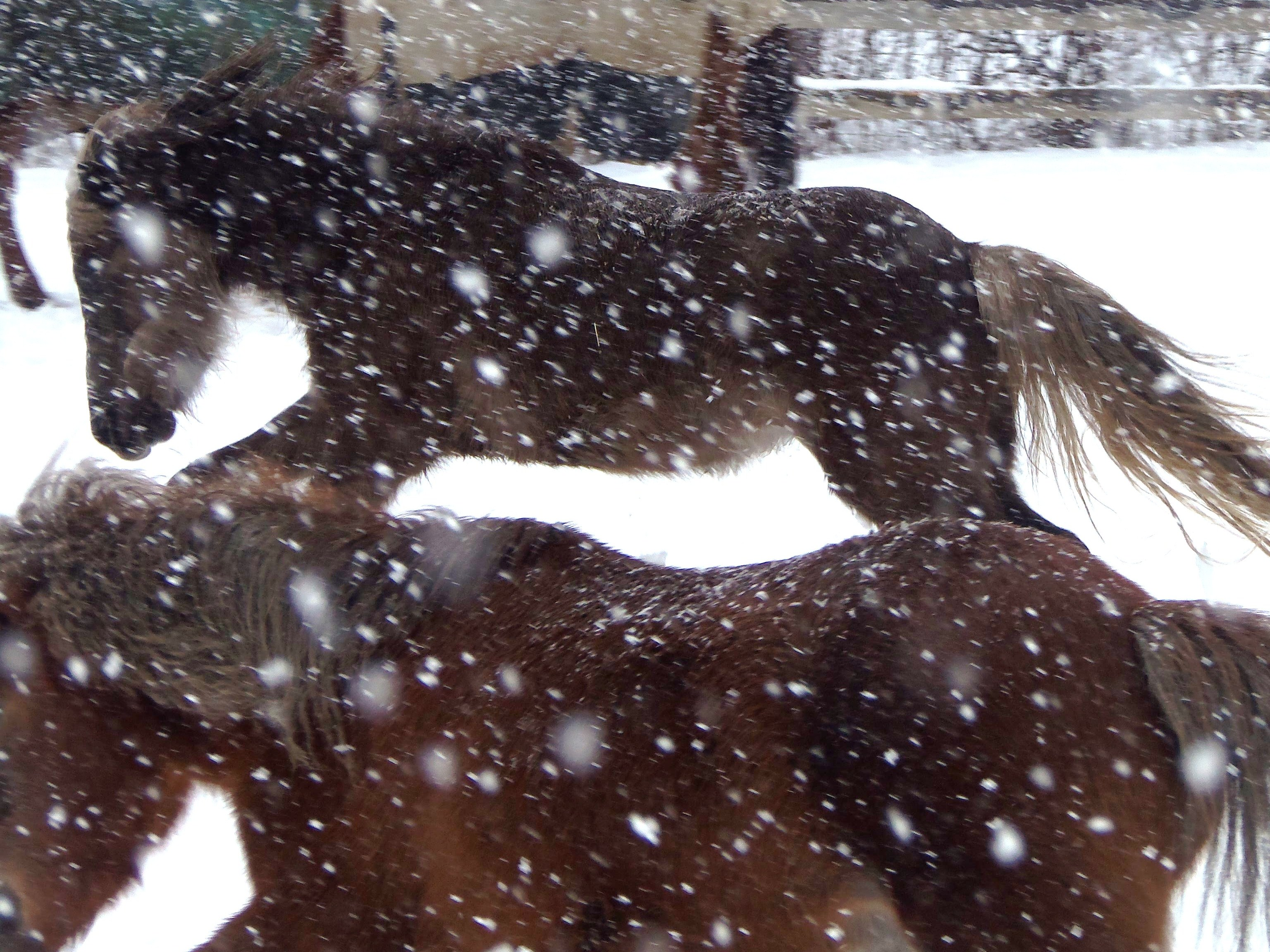 Winter Horse Care: What To Do With Horses In Cold Weather