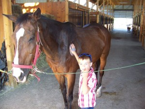child using horse grooming supplies