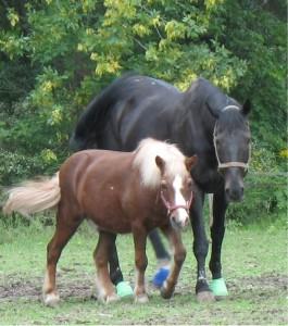 most popular horse names